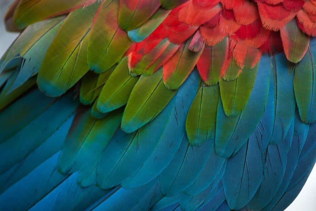 Amazonia Breathing Inspiration Book 2019 Ambientha
