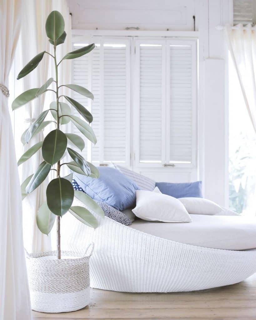 Decorare l\'ambiente e purificarlo: le piante in camera da ...