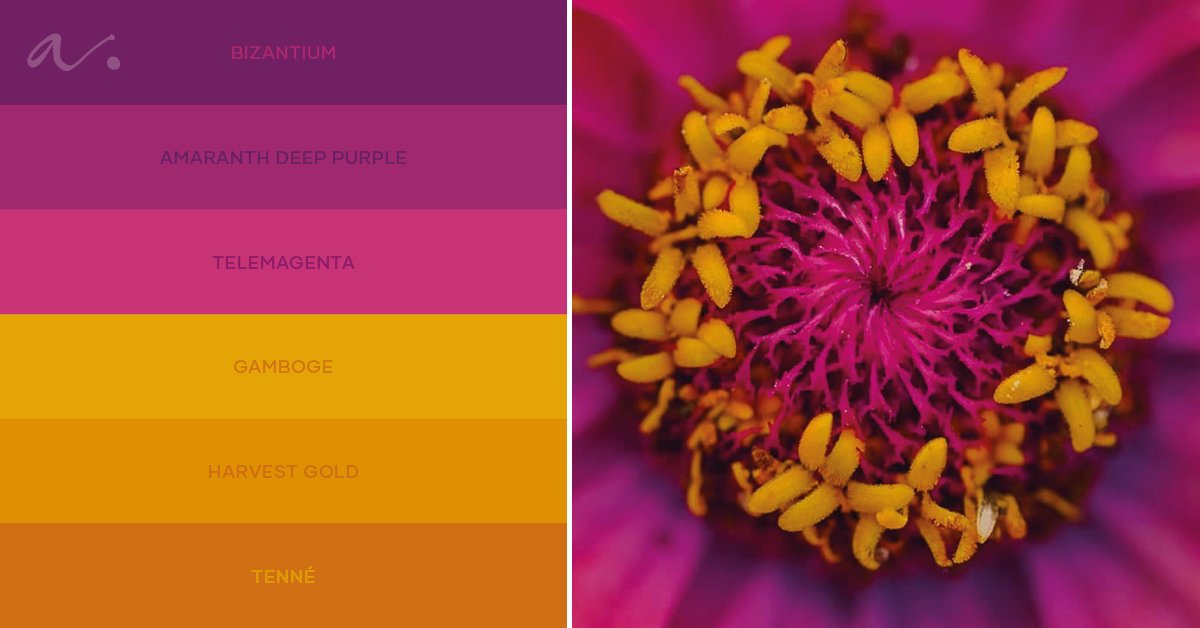 color palette fragrant desire livingtheinspiration ambientha