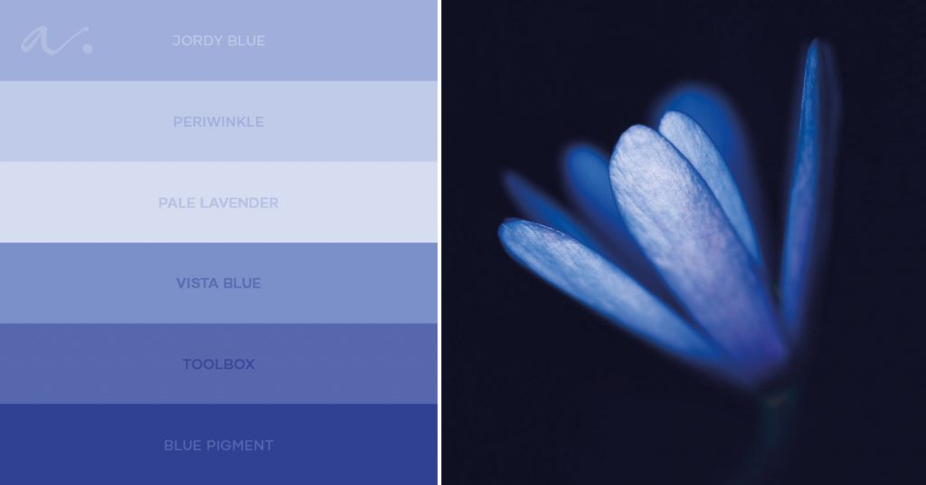 colour palette grecian windflower ambientha