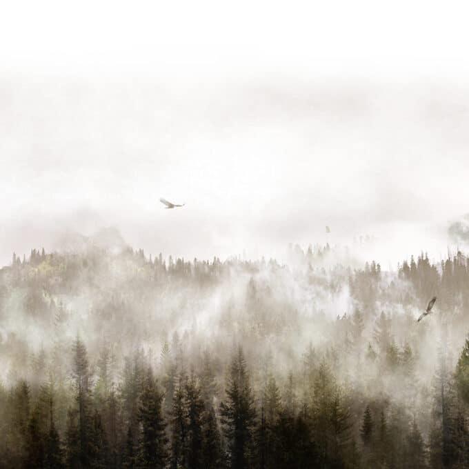 carta da parati montagne eagles sunray